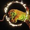 Цирки в Донском